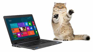 Une odeur de «pipi de chat» émane des ordinateurs Dell