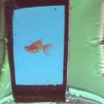 Sony publie des applications qui fonctionnent uniquement sous l'eau