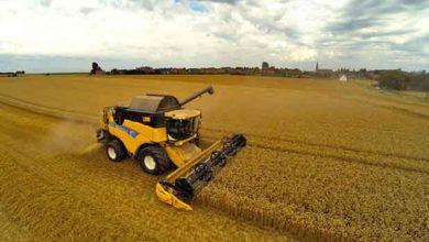 Champ de blé dans le nord de la France, en 2013.