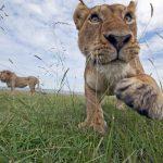 La moitié des populations d'espèces sauvages ont disparu en quarante ans, selon la WWF