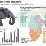 Le nombre d'éléphants s'est effondré de 60 % entre 2002 et 2011.
