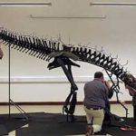 stegosaure-assemblage