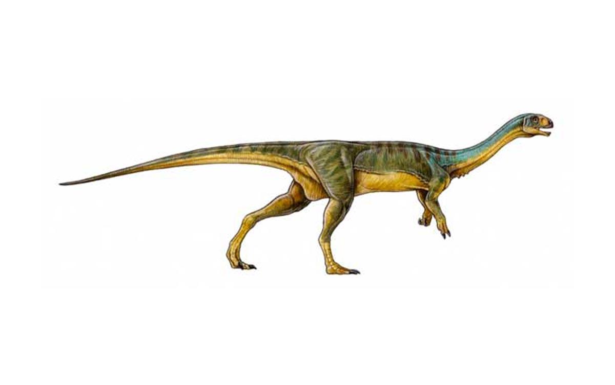 Le Chilesaurus, « un des dinosaures, les plus bizarres jamais découverts »