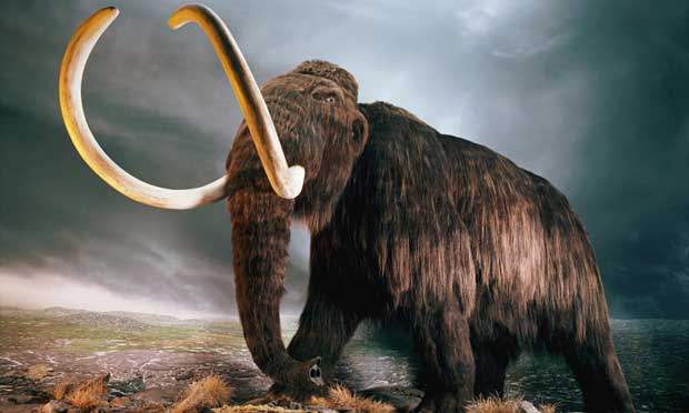 Le mammouth laineux bientôt ressuscité par la génétique ?