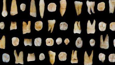 Découverte de dents d'Homo Sapiens datant d'au moins 80.000 ans en Chine.