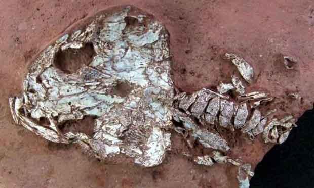 Brésil : découverte de deux espèces d'amphibiens éteintes il y a des millions d'années
