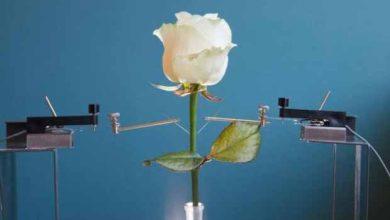 Produire de l'énergie avec des plantes, bientôt possible