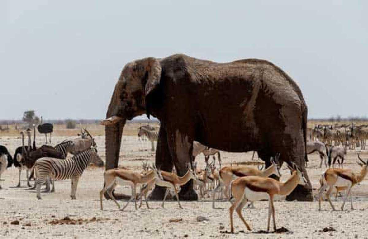Plus de la moitié des vertébrés a disparu ces 40 dernières années selon un rapport du WWF