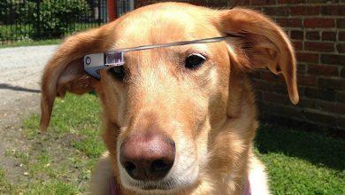 Google Glass : un modèle pour nos amis les bêtes ?