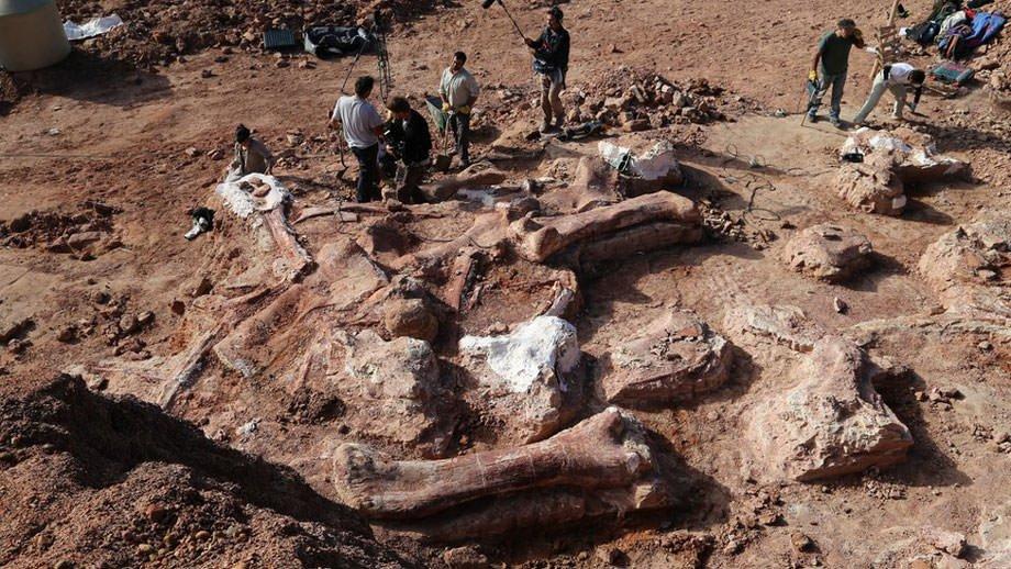Les restes du plus grand dinosaure ont été retrouvés en Argentine.