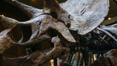 Photo de Dinosaures : l'astéroïde n'a été qu'un accélérateur de leur disparition