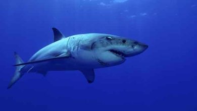 Câbles sous-marins : Google va les protéger des requins