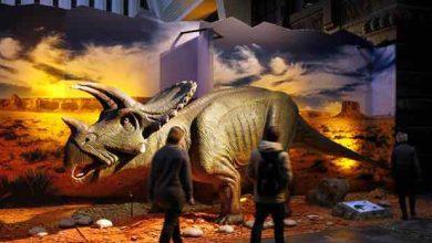 Photo de L'ancêtre des gros dinosaures était… un petit reptile bipède