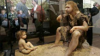 L'homme de Neandertal s'est éteint plus tôt que prévu