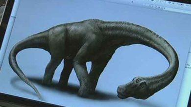 Photo de Découverte d'un dinosaure de 26 mètres de long pour 65 tonnes !