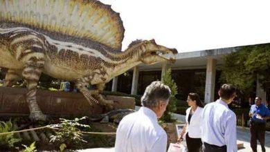 Photo de La découverte d'un dinosaure capable de nager au Maroc