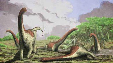 Photo de Encore une nouvelle espèce de dinosaures géants