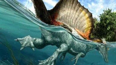 Photo de Le plus grand dinosaure carnivore de tous les temps était semi-aquatique