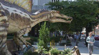 Photo de Paléontologie : le Spinosaurus se dévoile un siècle plus tard