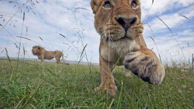 Photo de WWF : les populations d'espèces sauvages ont diminué de 52% en 40 ans !
