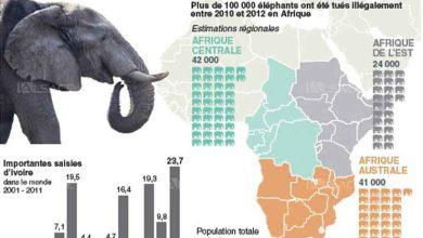Photo de L'homme a fait disparaitre 52% des populations d'animaux sauvages