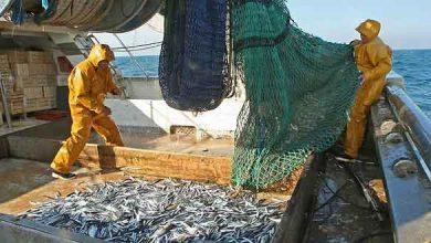 Photo de Pêche au thon : le signal d'alarme des thoniers français