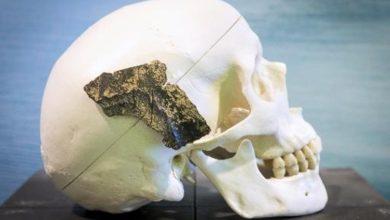 Un fragment d'os vieux de 9600 ans d'un homo sapiensau musée de Rotterdam le 24 janvier 2014.