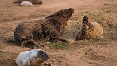 Photo de Les scientifiques mettent en garde contre les phoques gris