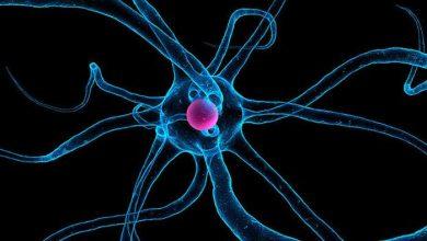 Photo of Alzheimer : importante découverte sur la perte de mémoire