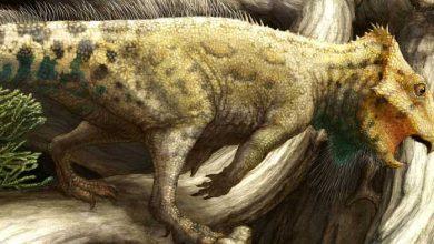 Photo de Aquilops americanus : découverte d'un nouveau dinosaure à corne