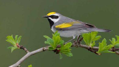 Photo de Les oiseaux sont capables de prédire les tornades