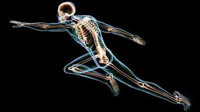 L'homme moderne a des os et articulations plus fragiles
