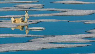 Photo of Réchauffement climatique : une année pour sauver notre planète !