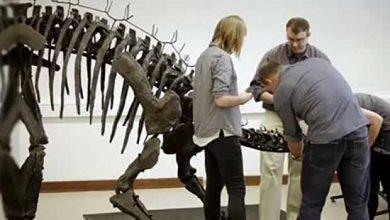 Photo de Un timelapse pour montrer l'assemblage d'un stégosaure