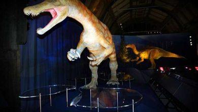 Les étranges dinosaures qui ont vécu en Grande-Bretagne