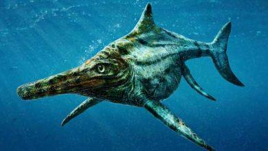 Photo de Dearcmhara shawcrossi : était-ce l'ancêtre du monstre du Loch Ness ?