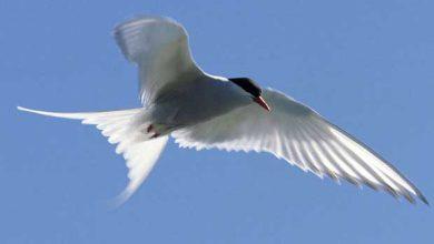 Photo de Des chercheurs résolvent l'énigme du camion transportant des oiseaux