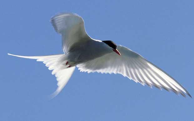 Des chercheurs résolvent l'énigme du camion transportant des oiseaux 1