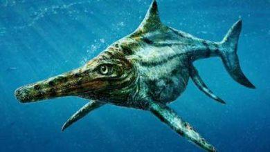 Photo of Des paléontologues identifient un reptile marin géant purement écossais