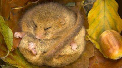 Photo of L'hibernation des animaux pourrait aider à lutter contre la maladie d'Alzheimer