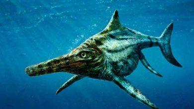 Photo of Un ichthyosaure 100% écossais