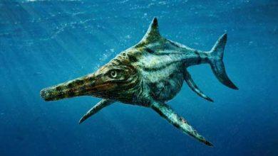 Photo of Un reptile préhistorique qui pourrait être le cousin du monstre du Loch Ness