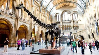 Photo of Musée d'histoire naturelle : le dinosaure Dippy doit céder sa place à une baleine bleue