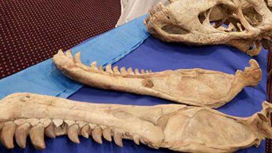 Des enfants découvrent une espèce de reptile marin vieille de 70 millions d'années
