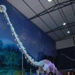 Découverte d'un « dragon » long-cou du jurassique en Chine