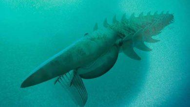 Aegirocassis benmoulae : un monstre marin vieux de 480 millions d'années