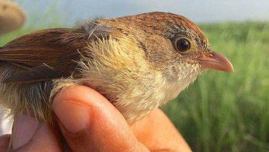 Photo de Des ornithologues redécouvrent un oiseau disparu depuis 73 ans