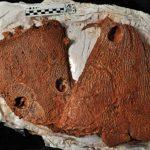 Des salamandres carnivores géantes hantaient la Terre à l'époque des premiers dinosaures