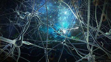 La greffe de neurones pour réparer le cerveau