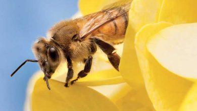 Photo of Les abeilles sont bien plus intelligentes qu'on le pense